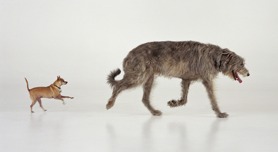 Martin Creed - Big Dog, Small Dog (Southbank)