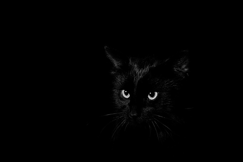 """""""The hardest thing of all is to find a black cat in a dark room, especially if there is no cat."""" - Confucius"""