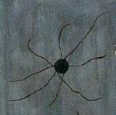 Miro - Spider
